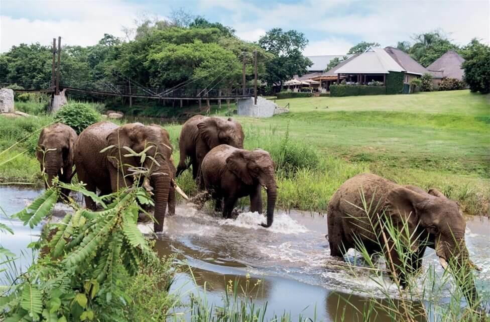 Win a 2021 safari holiday from Neutradol